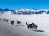 juneau-dog-sled-tour_02_eng